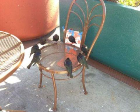 """""""Apaļā Krēsla Bruņinieki"""""""