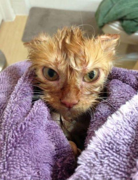 Nu gan es esmu dusmīgs! Vai tad nezinājāt, ka kaķiem nepatīk ūdens? Zinājāt, zinājāt, bet vai tad kādam interesē manas domas?