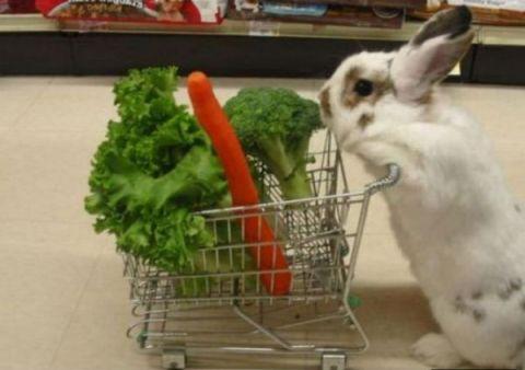 Mazam trusītim lielveikalā nemaz tik lielas izvēles nav. Bet dienišķais burkāniņš un zaļumiņš atradīsies vienmēr. Arī par maziem trusīšu iepirkšanās ratiņiem ir padomāts. Ļoti labs veikals.