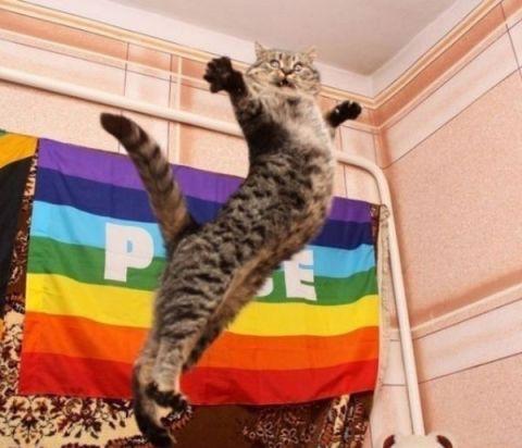 """Es neesmu kaut kāds """"hi-hī-kaķis"""", es esmu Kung-Fu kaķis! Neiesaku mani aiztikt!"""